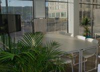 indoor-plant-hire