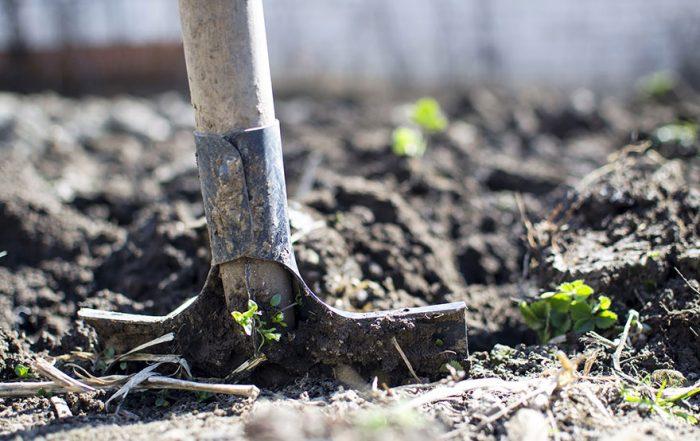 feature-garden-maintenance