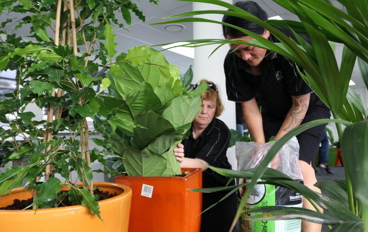 indoor-plant-hire-reset-intro