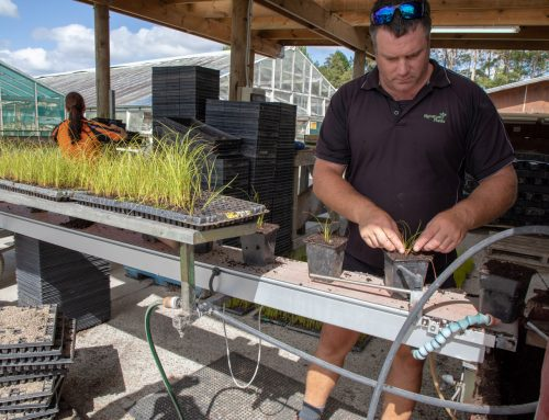 Signature Plants is growing 95% natives for a greener Auckland