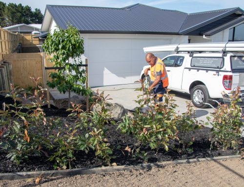 Auckland Commercial Residential Landscaping Division
