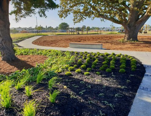 Waiata Shores landscaping and construction