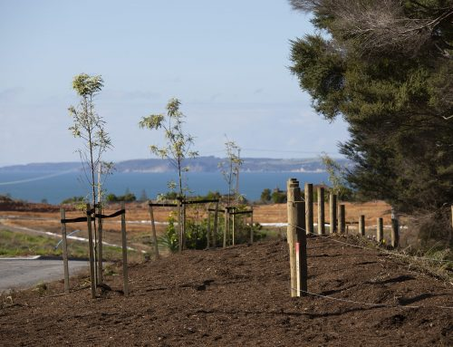 Environmental and Landscaping Services for Sunny Heights, Orewa