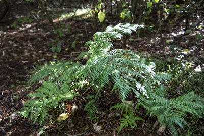 Larger canopy trees provide shelter for smaller plants to thrive