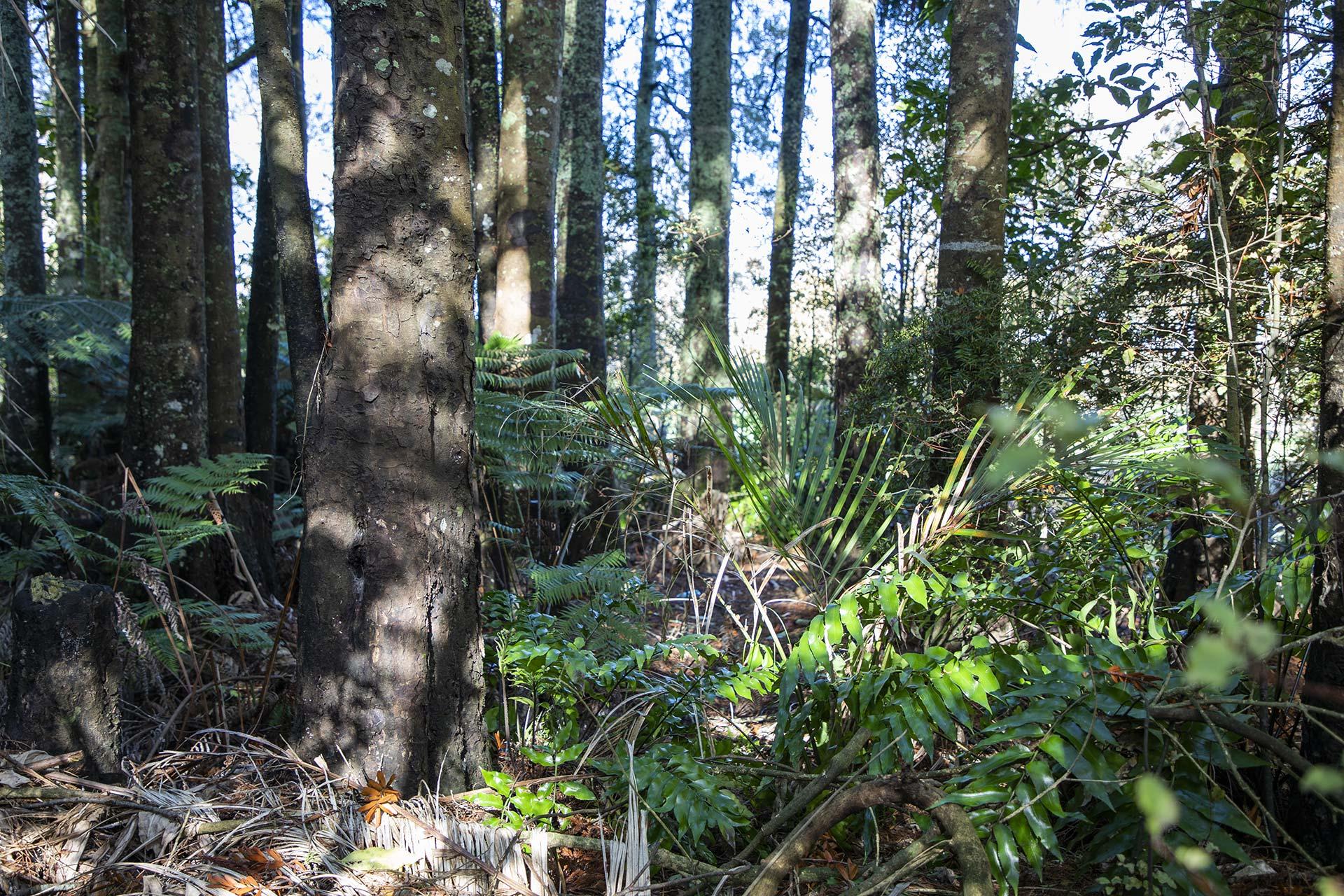 Inside the native bush at Ashmole Farm