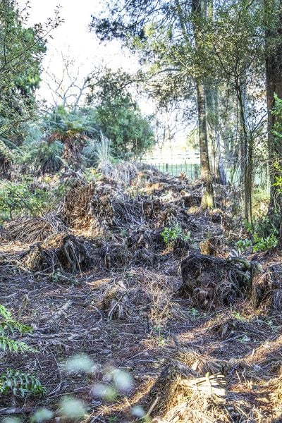 A cleared area where pampas grass dominated