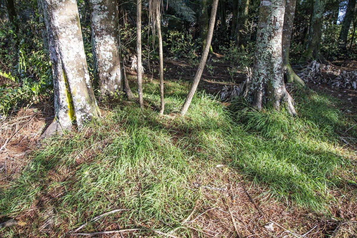 Native grasses form part of the solution
