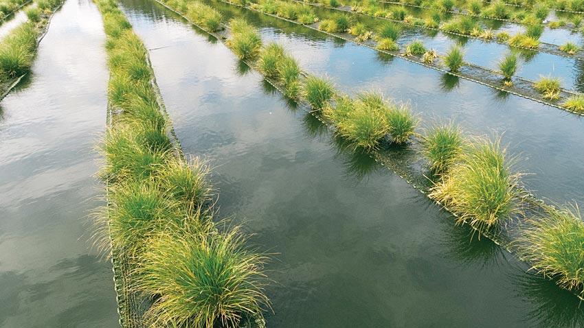 floating-wetlands-0033
