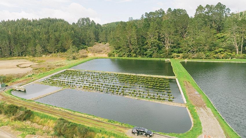 floating-wetlands-0051