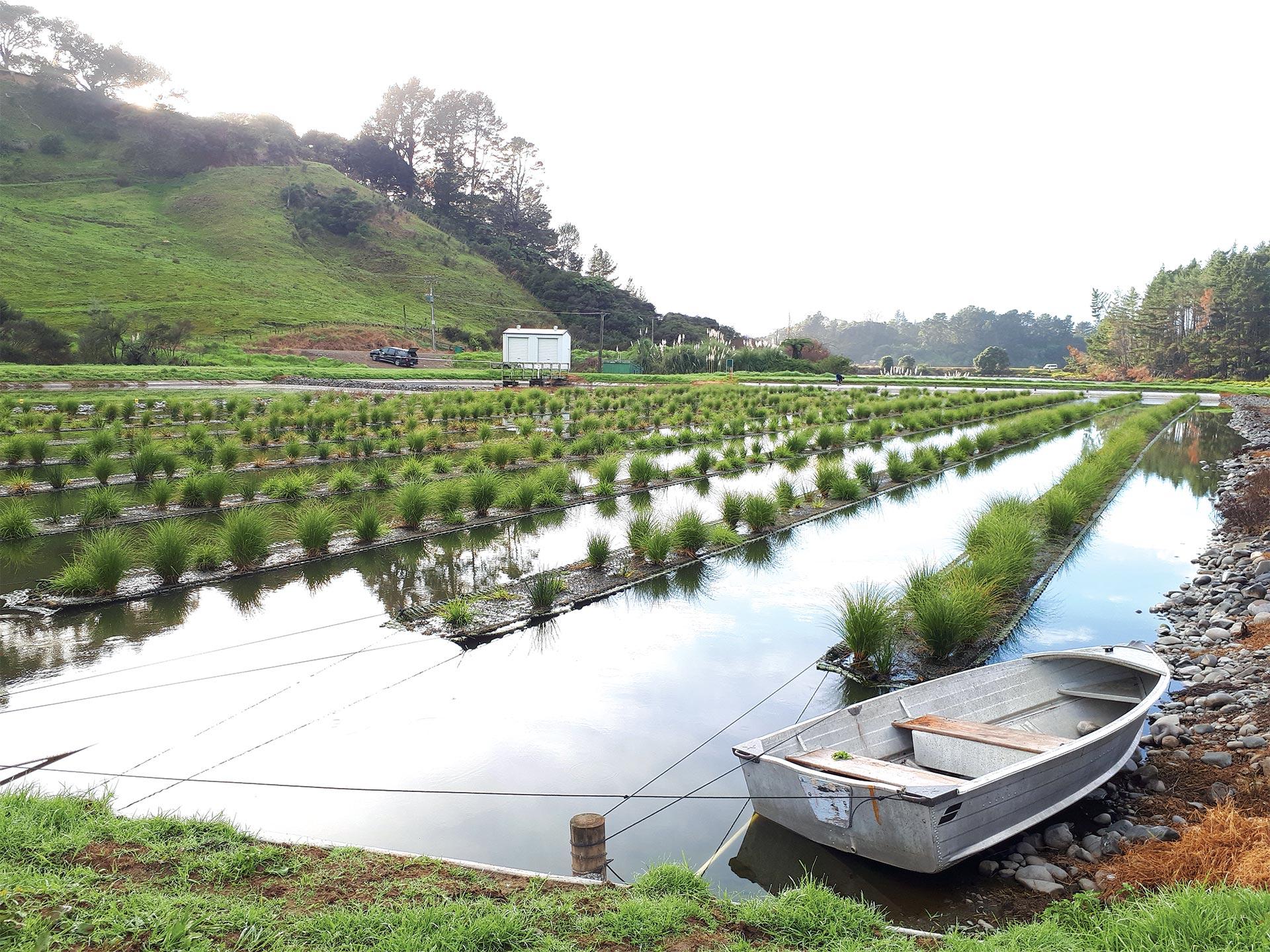floating-wetlands-082602