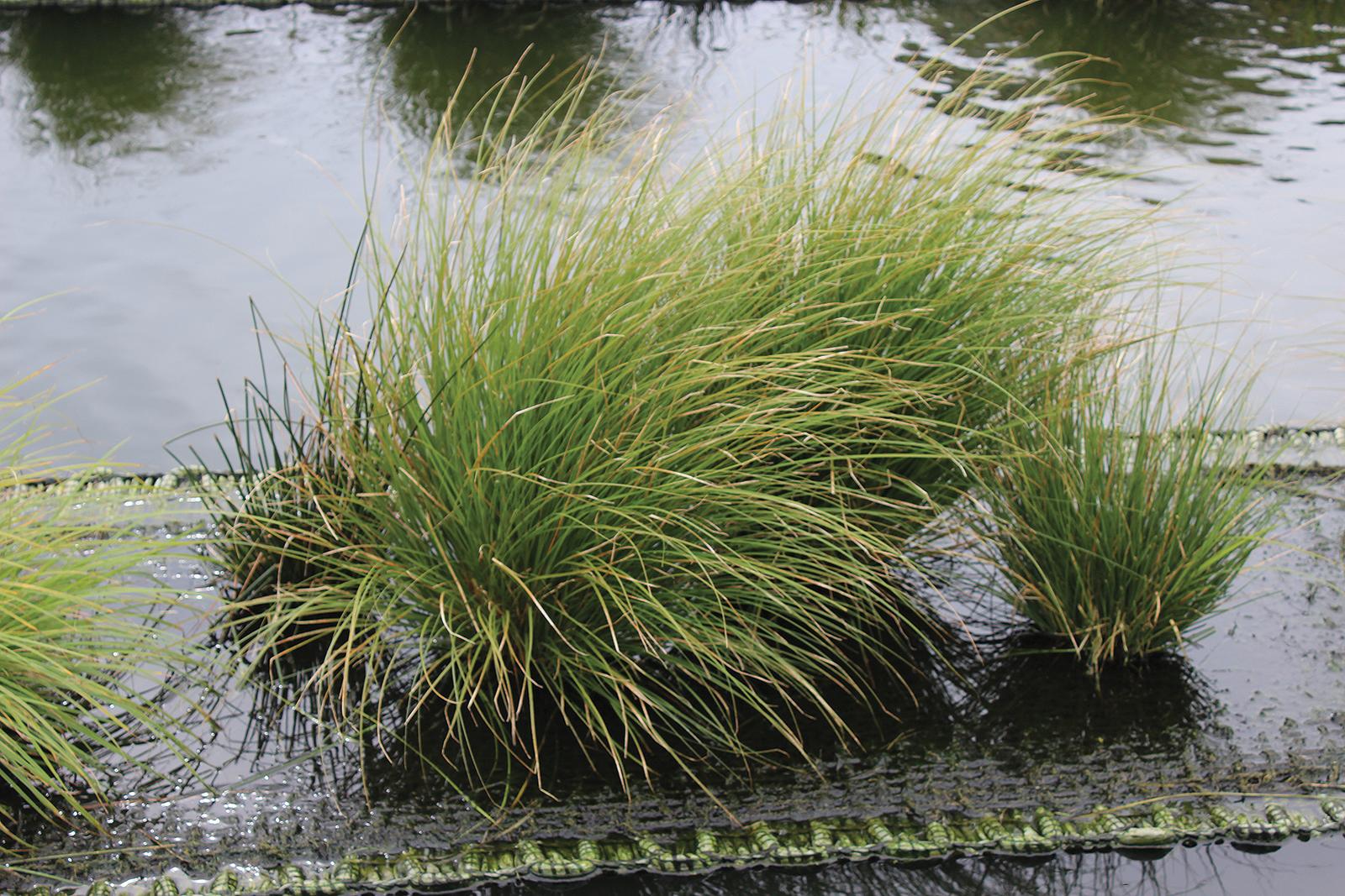 floating-wetlands-4603