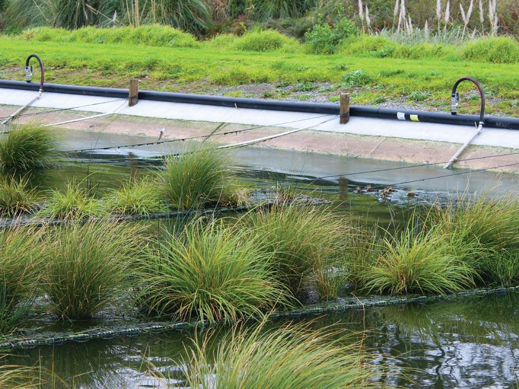 floating-wetlands-4605