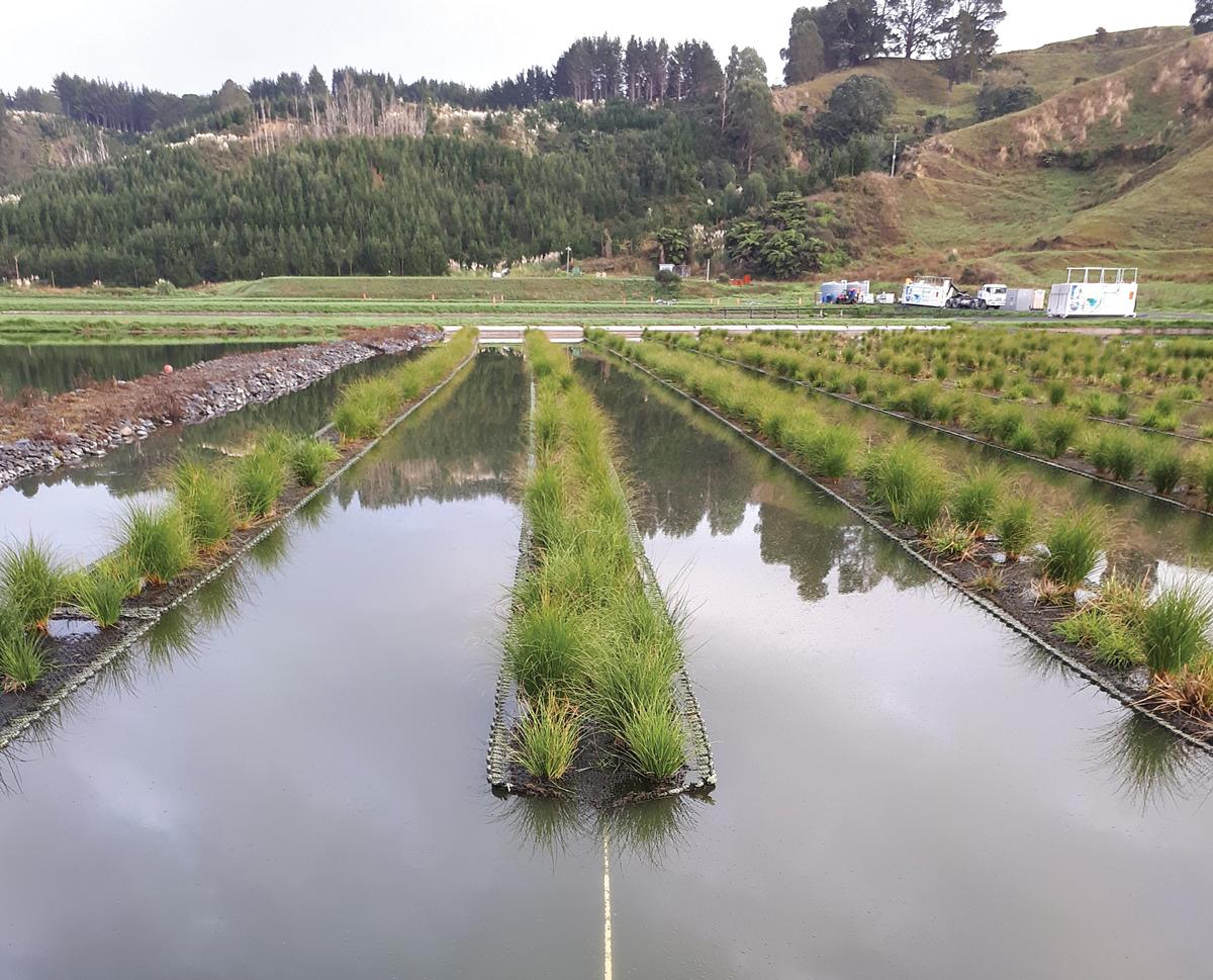 floating-wetlands-ohope-18