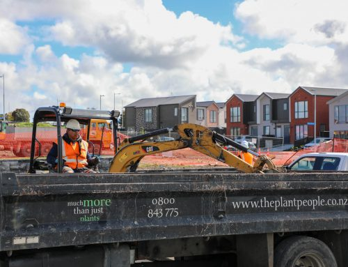 Streetscaping helps Hobsonville Point's continued development