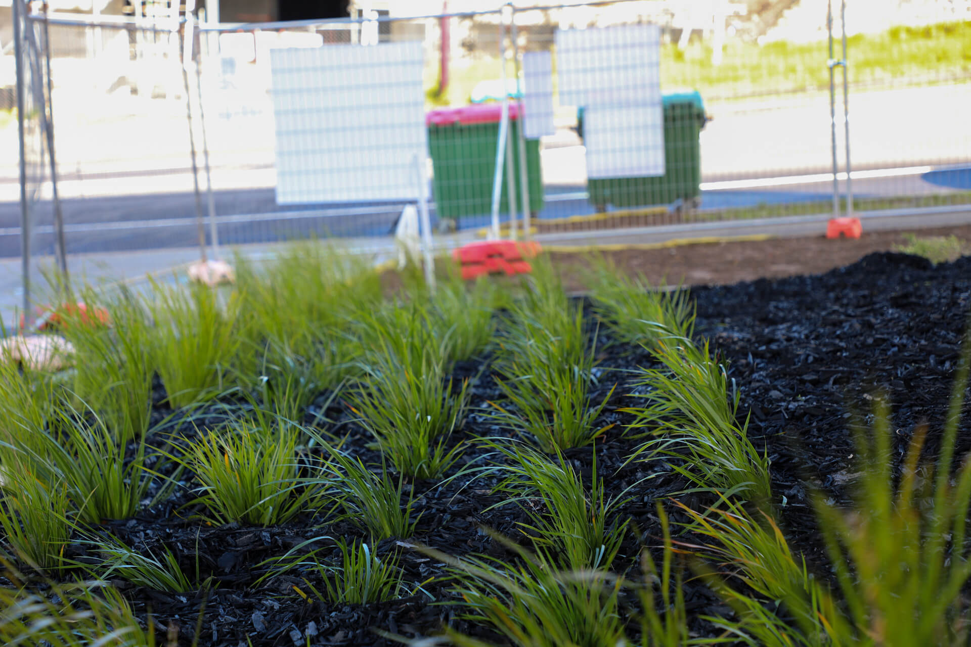 commercial-landscaping-albany-182A9091
