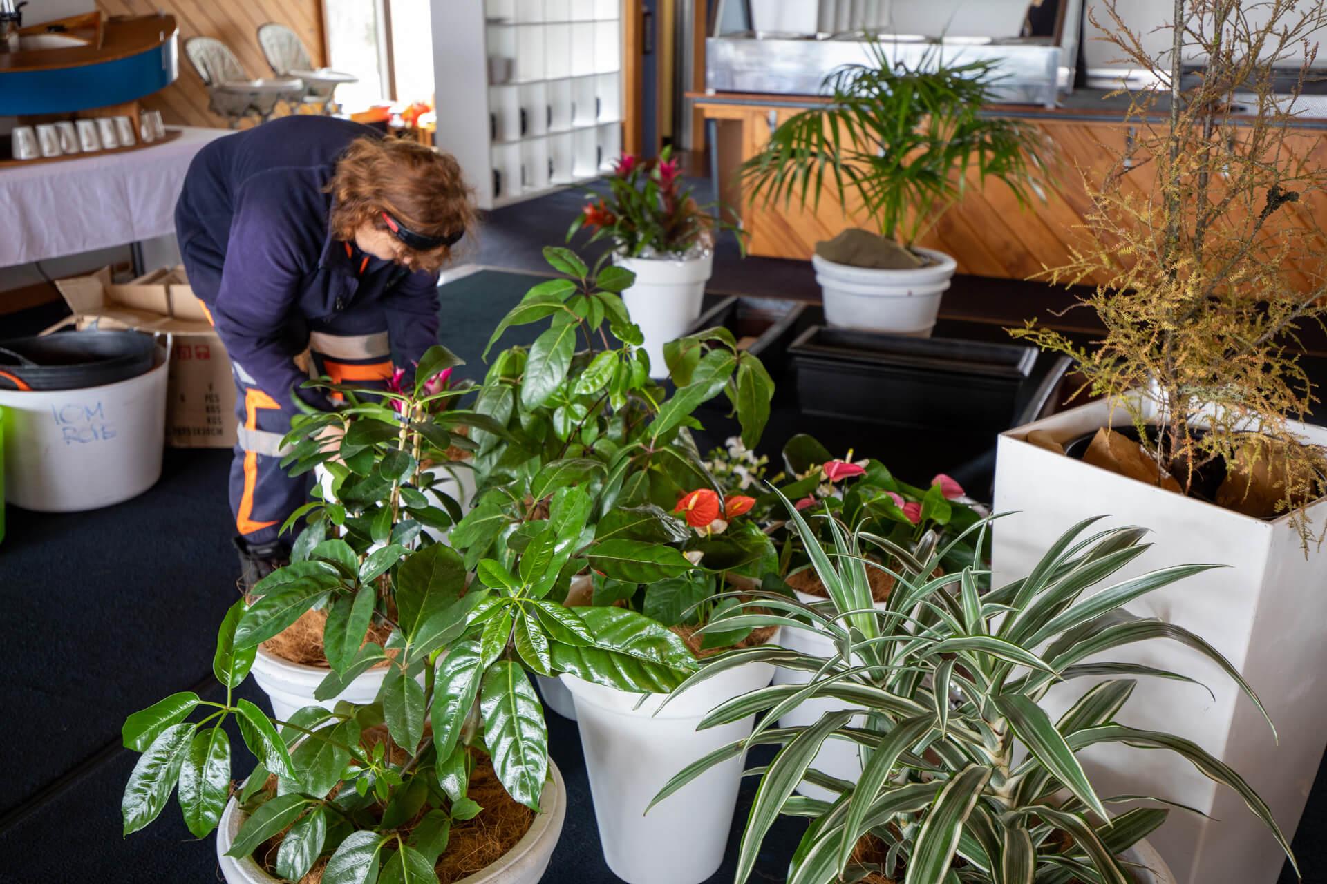 indoor-plant-hire-mbbc-182A9506
