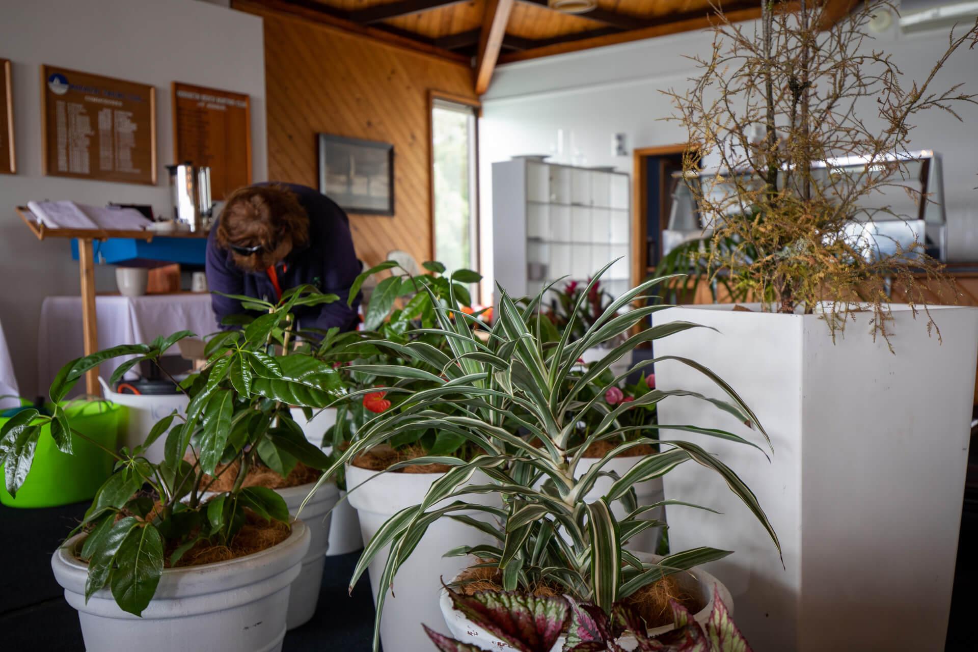 indoor-plant-hire-mbbc-182A9507
