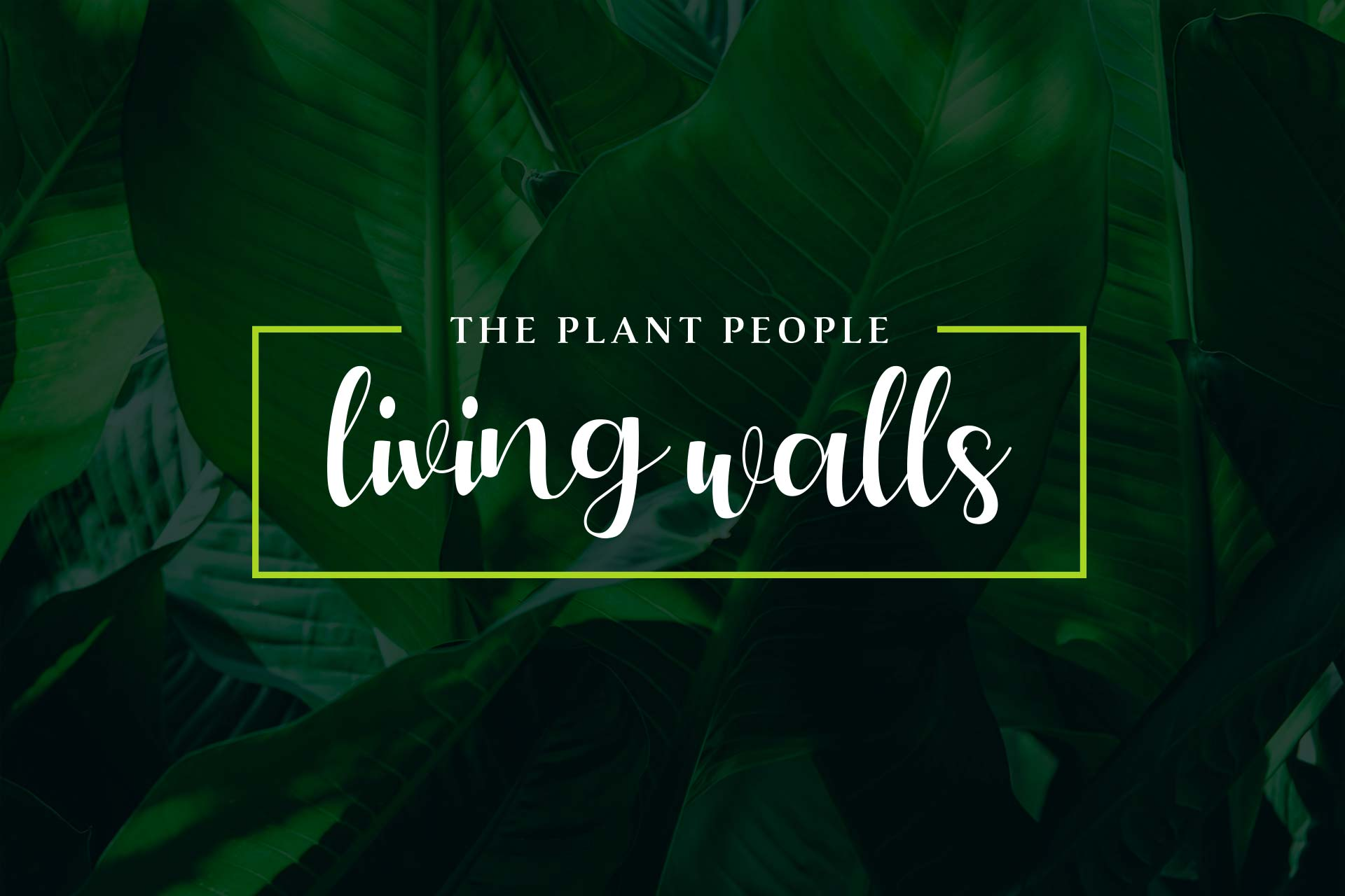 living-walls-auckland-the-plant-people-hero